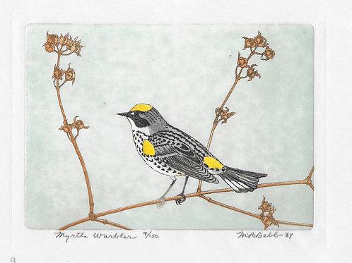 Myrtle Warbler 1967