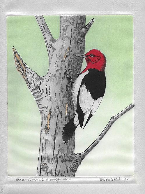 Red-headed Woodpecker 1964