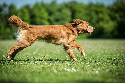 Heidi E. Hundetræning, Hvalpetræning