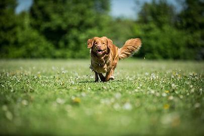 Heidi E. Hundeskole, Hundetræning, Indkald