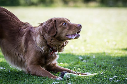 Heidi E. Hundetræning, Tricks