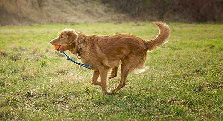 Heidi E. Hundekurser