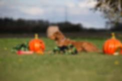 Heidi E. Hundeskole, HUndetræning, Hvalpetræning