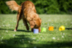 Heidi E. Hundetræning, hundeskole