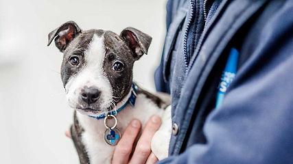 doggie blue cross.jpg