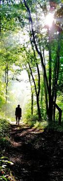 Ile Broulard Forest