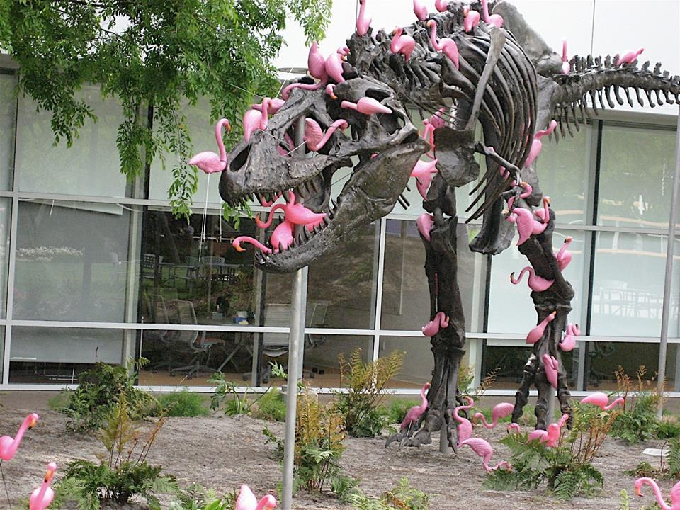 T-rex with pink Flamingos