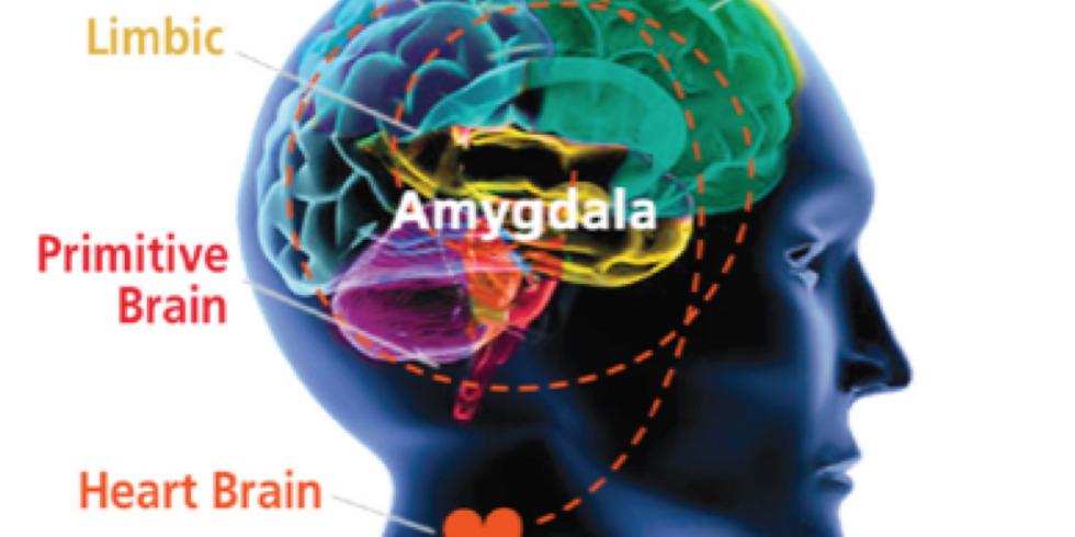 FoW Talk - Neuroscience for Innovation