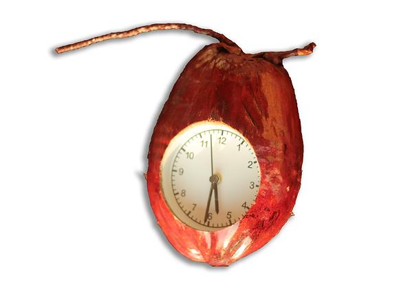 Real Coconut Clock