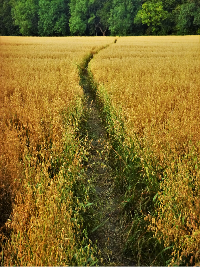 Saturday Writing Prompt -4th September-Field Trail