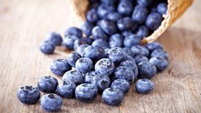 Canadá, o maior produtor de blueberries silvestres do mundo
