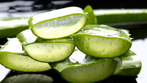 Aloe Vera: Um excelente detox que ajuda evitar várias doenças