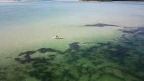 Beyond Science: Surprising Benefits of Kelp