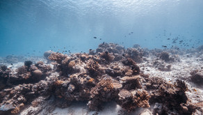 Thinking Ahead: Why Reefs Matter
