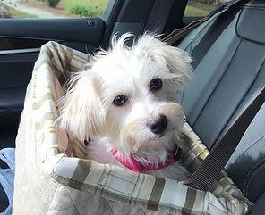 Gypsy.Adopted.jpg