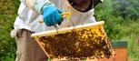 apadrina-una-colmena-de-abejas-en-asturi