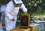 _apicultor1_ec49b8cc.jpg