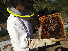 apicultor con panal abejas