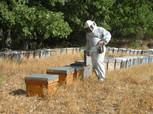cuanto-gana-un-apicultor.jpg