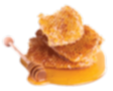 miel y panales abeja