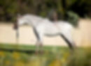 Painted H Ranch Miniature Horses