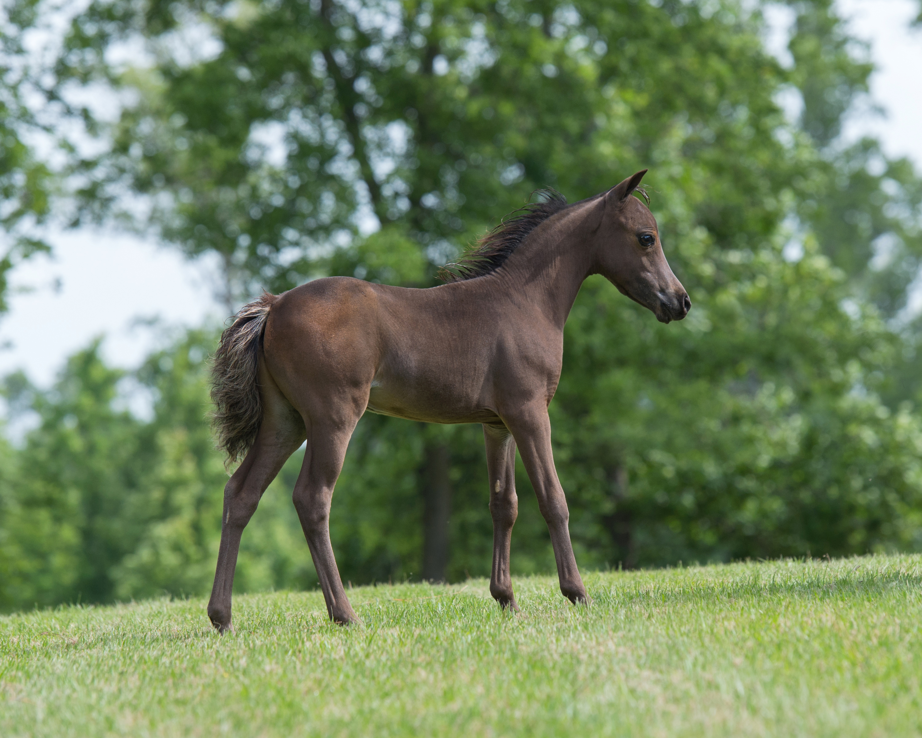 Unnamed 2017 Colt