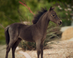 Unnamed Filly
