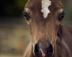 2019 Unnamed Filly