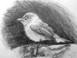 Pencil on paper