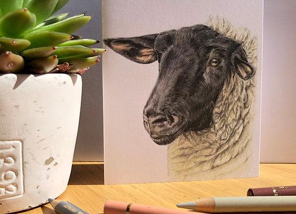 Suffolk Sheep Greeting Card