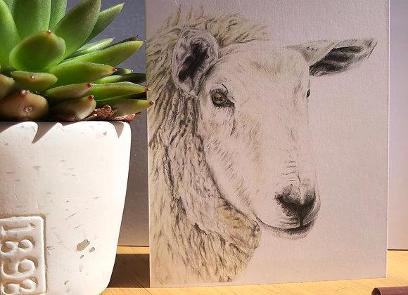 Texel Sheep Greeting Card