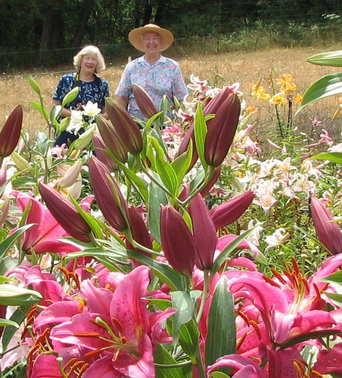 Enjoying the lilies (2)