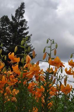 'Orange Valley'