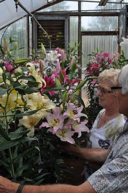 Enjoying the lilies (8)