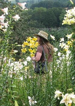 Enjoying the lilies (10)