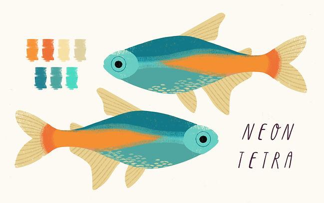 Neon Tetra Illustration