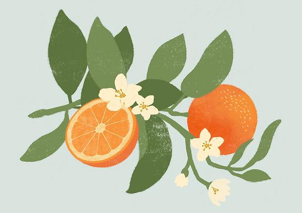 Botanical Oranges Illustration