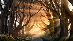 The-real-Dark-Hedges-County-Antrim-63531