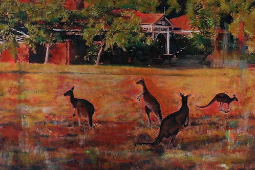 Kangaroo field