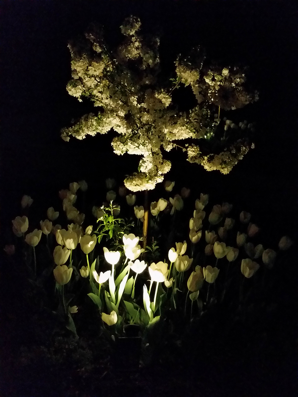 Gardens at nightime