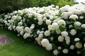 Our Gardening Goal
