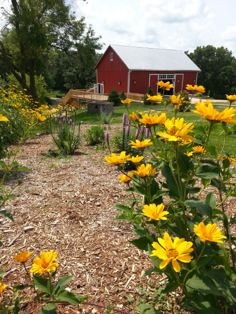 View of barn from flower bed
