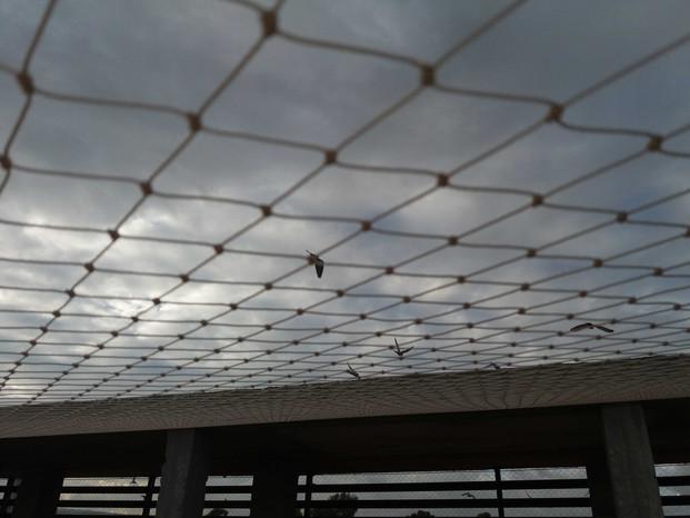 הרחקת יונים-גגות טכניים (3).jpg