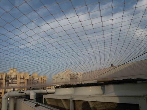 הרחקת יונים-גגות טכניים (16).jpg