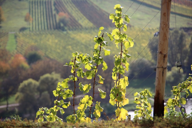 MARKUS HÜLS | Riesling Youngsters