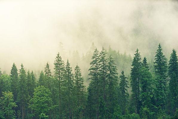 Stieglitz Natur Blog Buch Rezension Natur Tiere Pflanzen Klimaschutz Insekten Umwelt.jpg
