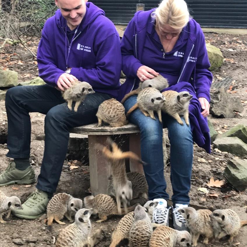 Ahhhhhh - meerkats!