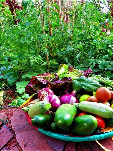 Harvesting from the organic vegetable garden of Kasbah Azul