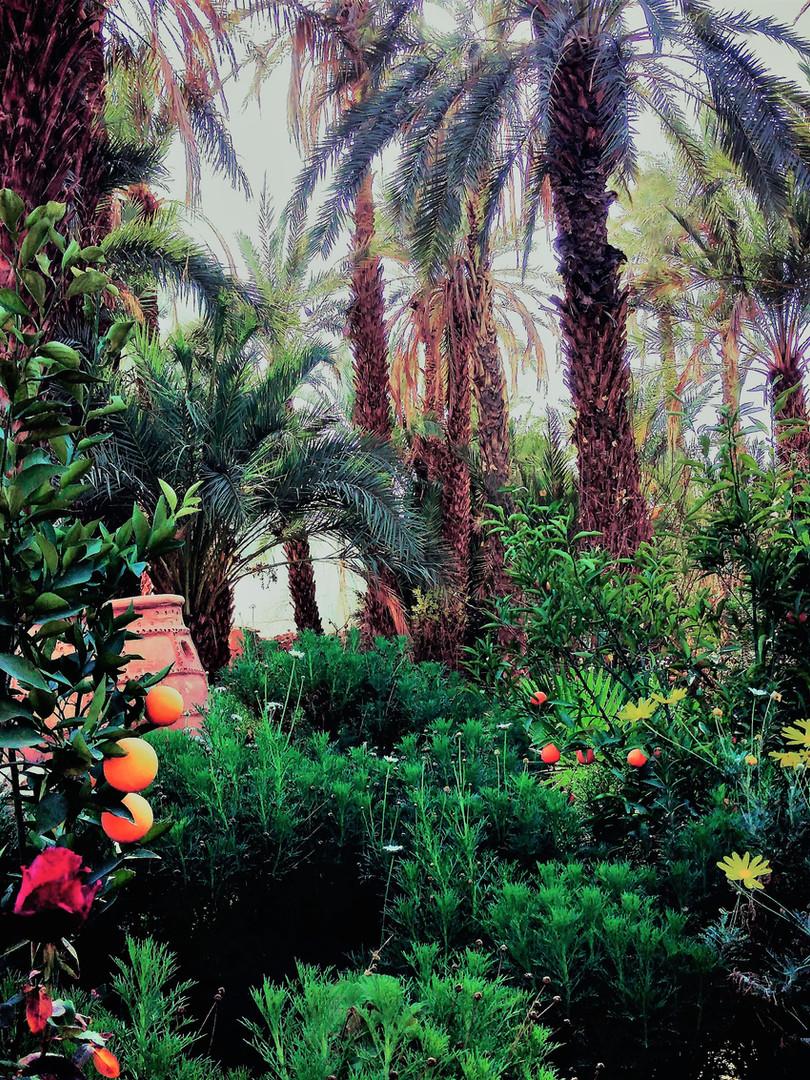 Luxuriant garden of the Kasbah Azul ecolodge