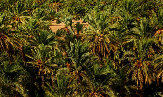hotel kasbah azul dans l palmeraie d'agdz vllée du dra sud du maroc